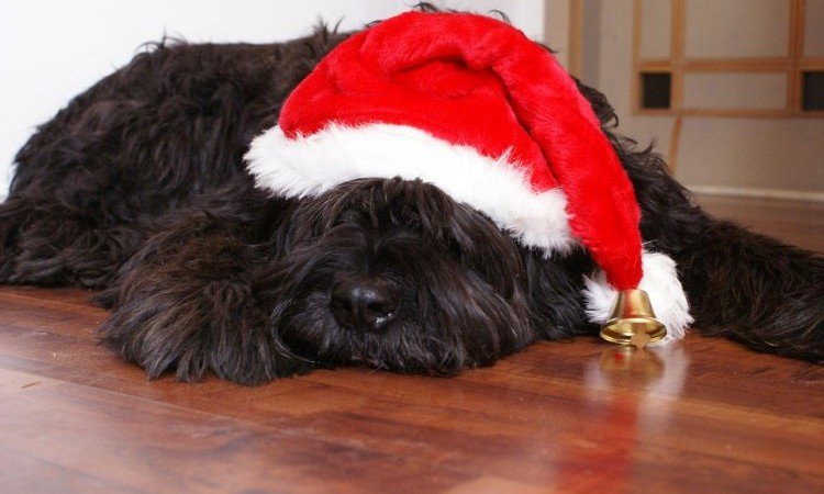 Stocking Stuffer Ideas for Your Family Pet